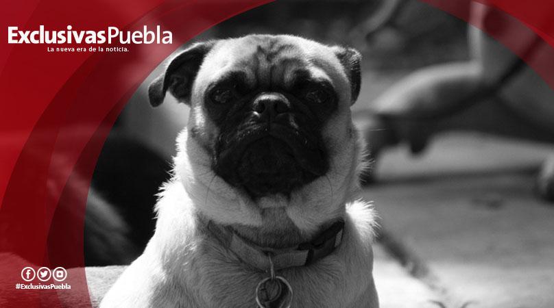 ¿El 1 de julio también podrás votar en las urnas contra el maltrato animal? Falso