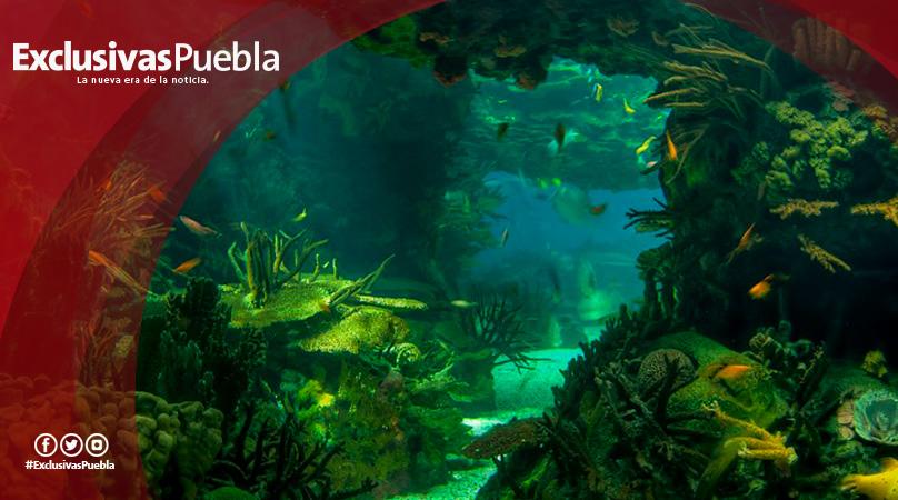 ¿Sabías que en el mar también hay bosques?